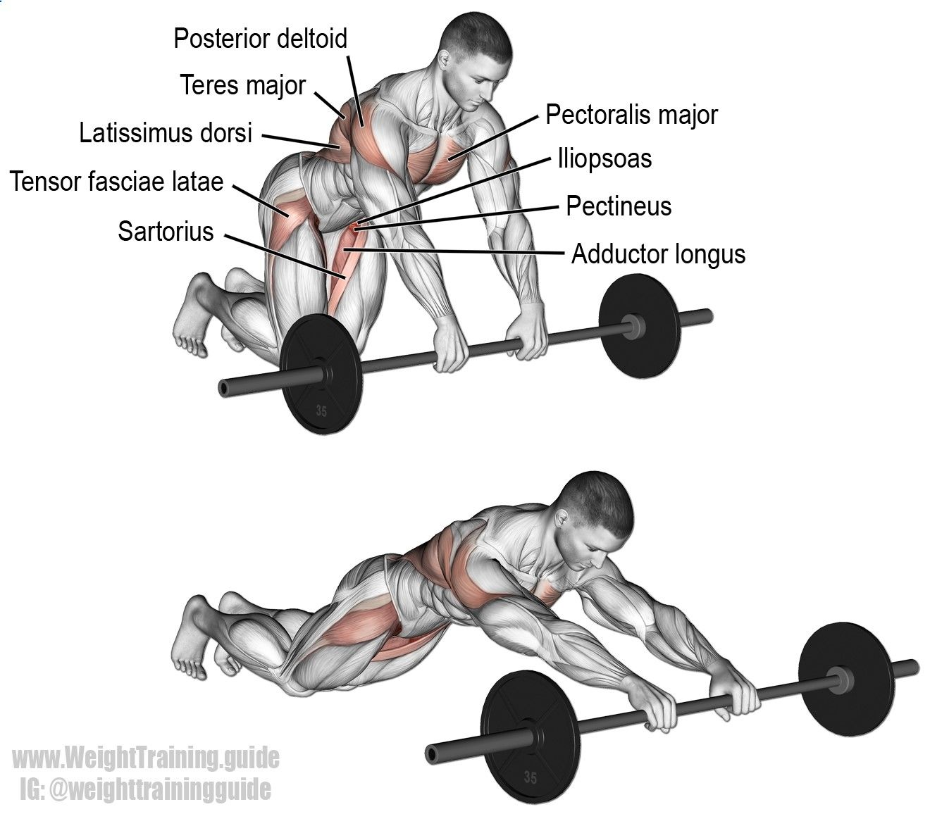 Barbell Rollout A Compound Exercise That Targets Your Hip