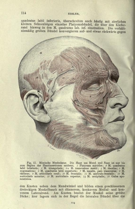 Handbuch der Anatomie des Menschen   Power Human Anatomy I ...