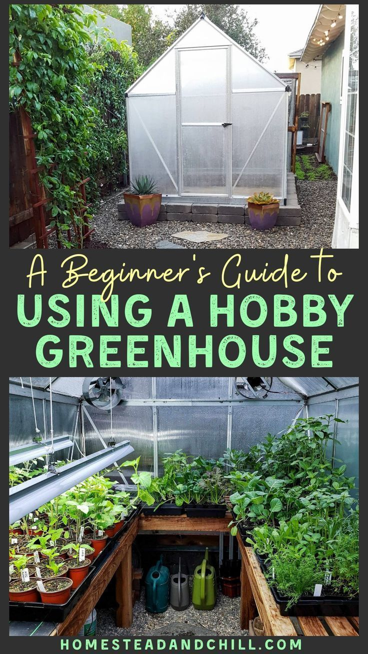 A Beginner S Guide To Using A Hobby Greenhouse Homestead And Chill Diy Greenhouse Plans Greenhouse Plans Backyard Greenhouse Backyard greenhouse for beginners