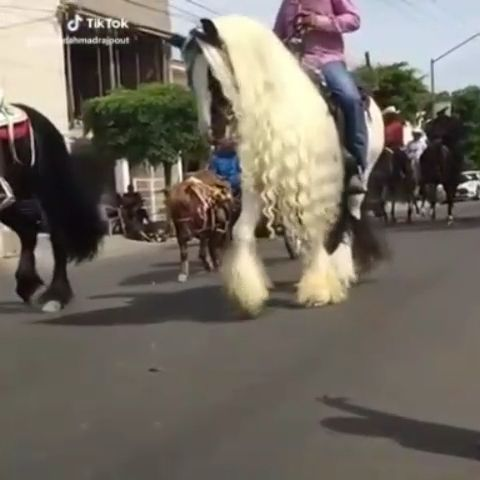Wow This man loves his horse a lot. Please follow Animals Board for more videos