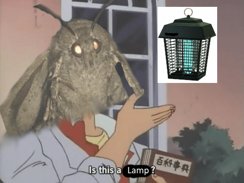 18 More Of These Absolutely Unstoppable Moth Memes Funny Memes Memes Gaming Memes