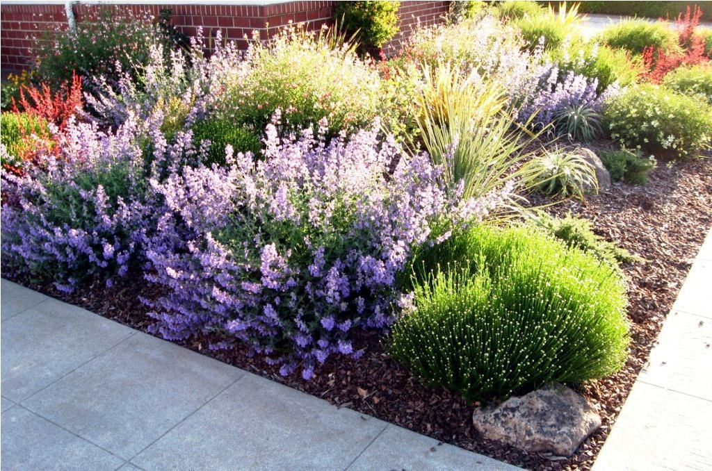 Low Water Landscaping Designs Ideas | gardens | Pinterest ...