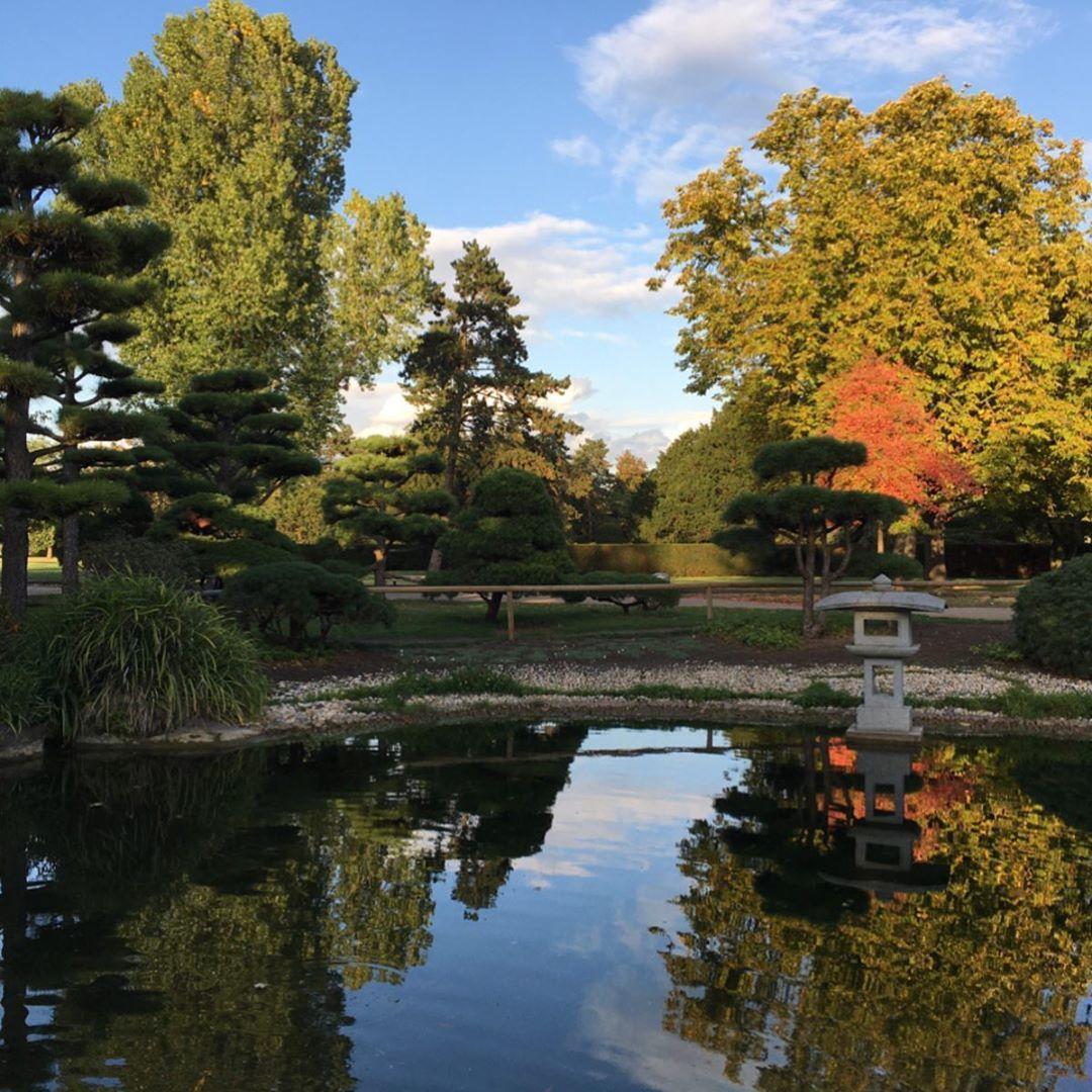Relaxingwalk In Japanischergarten Japanesegardendusseldorf Garden Japanesegarden Dusseldorf Germany Park Nature Relax Japanischer Garten Garten Japan