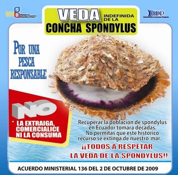 Proyecto Spondylus. Conservacion, Cultivo, Ecologia de la concha spondylus en el Parque Nacional Machalilla, Ecuador. Hosteria La Perla