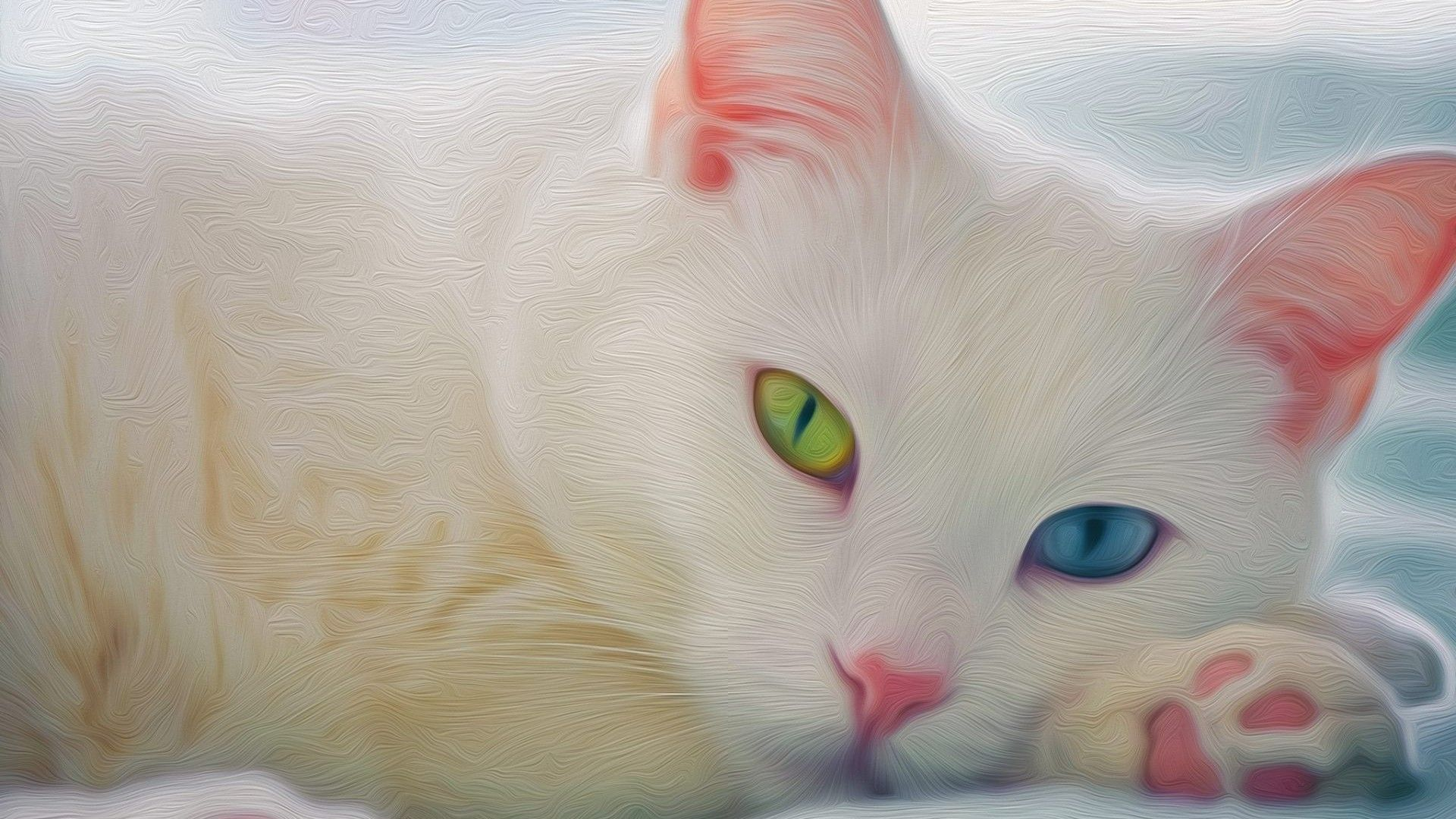 Free Download High Resolution White Catwallpaper For Desktop