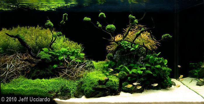 2010 AGA Aquascaping Contest - Entry #115