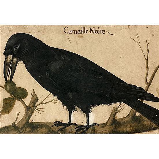 French school, mid-sixteenth century. The Black Crow. Gouache. (Paris around 1544-1590)