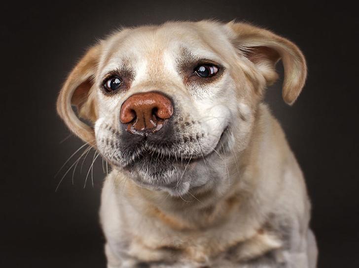 Открытках, смешные картинки с изображением собаки