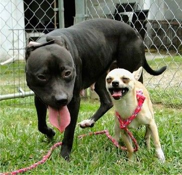 Stray Dogs Are Best Of Friends And They Need To Be Adopted From