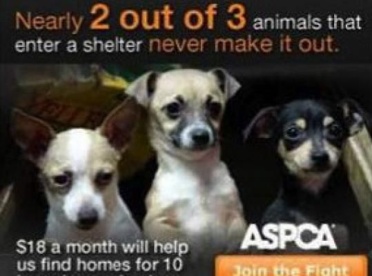 I Uploaded A Spca Advertisement Video Earlier But They Took It Down So Here Is A Picture From One Of Their Advertisements I Choos Animals Animal Shelter Dogs