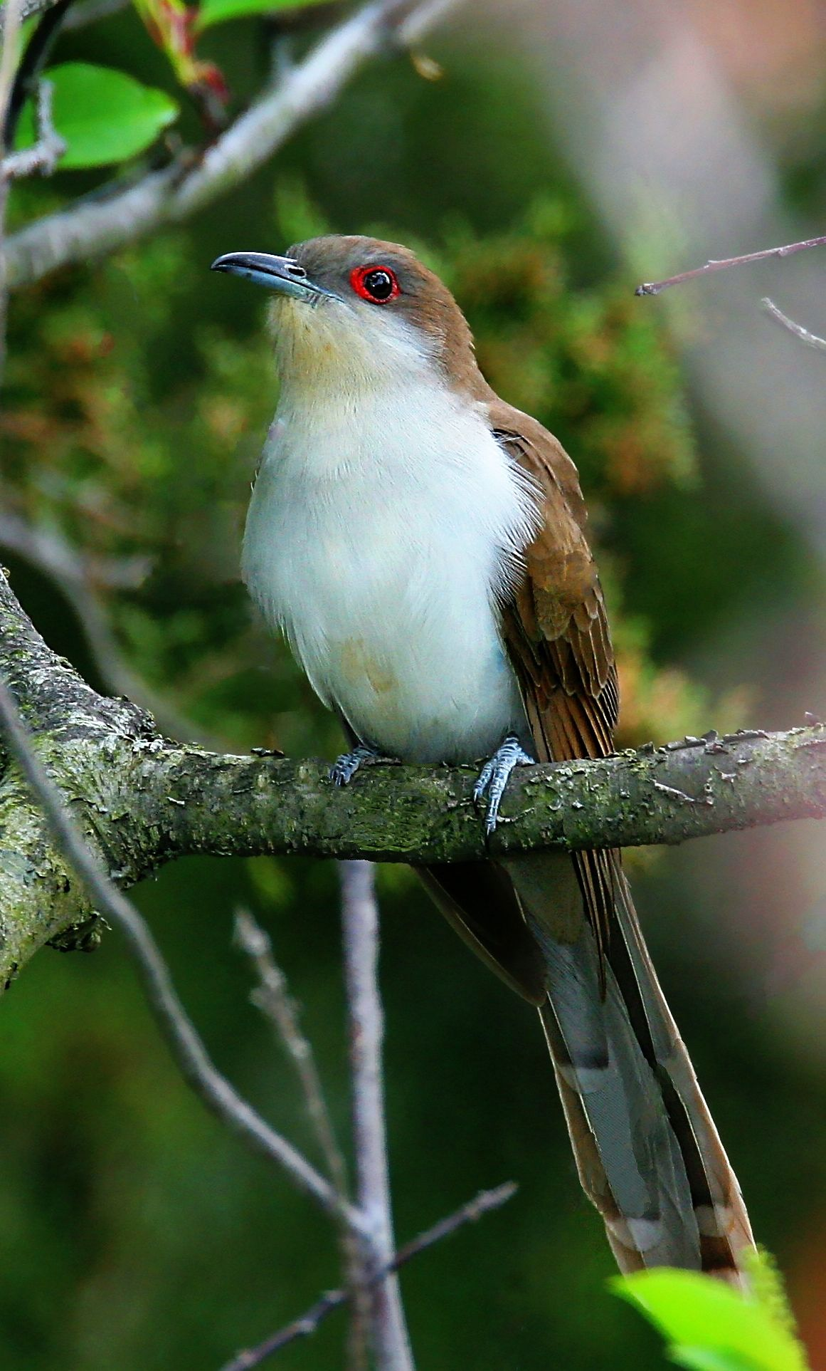 Bird Beautiful Birds Bird Life List Birds
