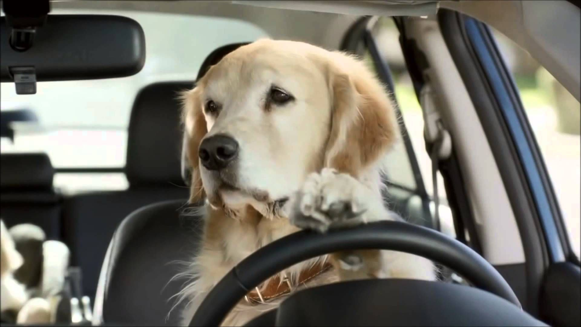 Subaru Dog Commercial - funny commercials! | Subaru ...