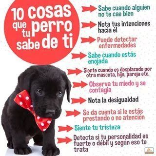 Conoces Las Cosas Que Tu Perro Sabe De Ti Pet Hacks Animals And Pets Dog Care