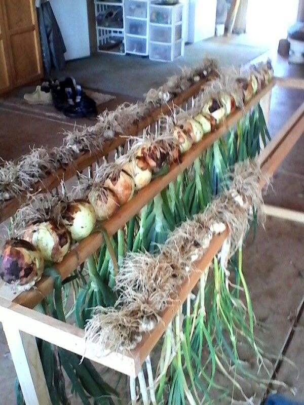 Drying Rack Jim Made To Dry Onions And Garlic Vegetable