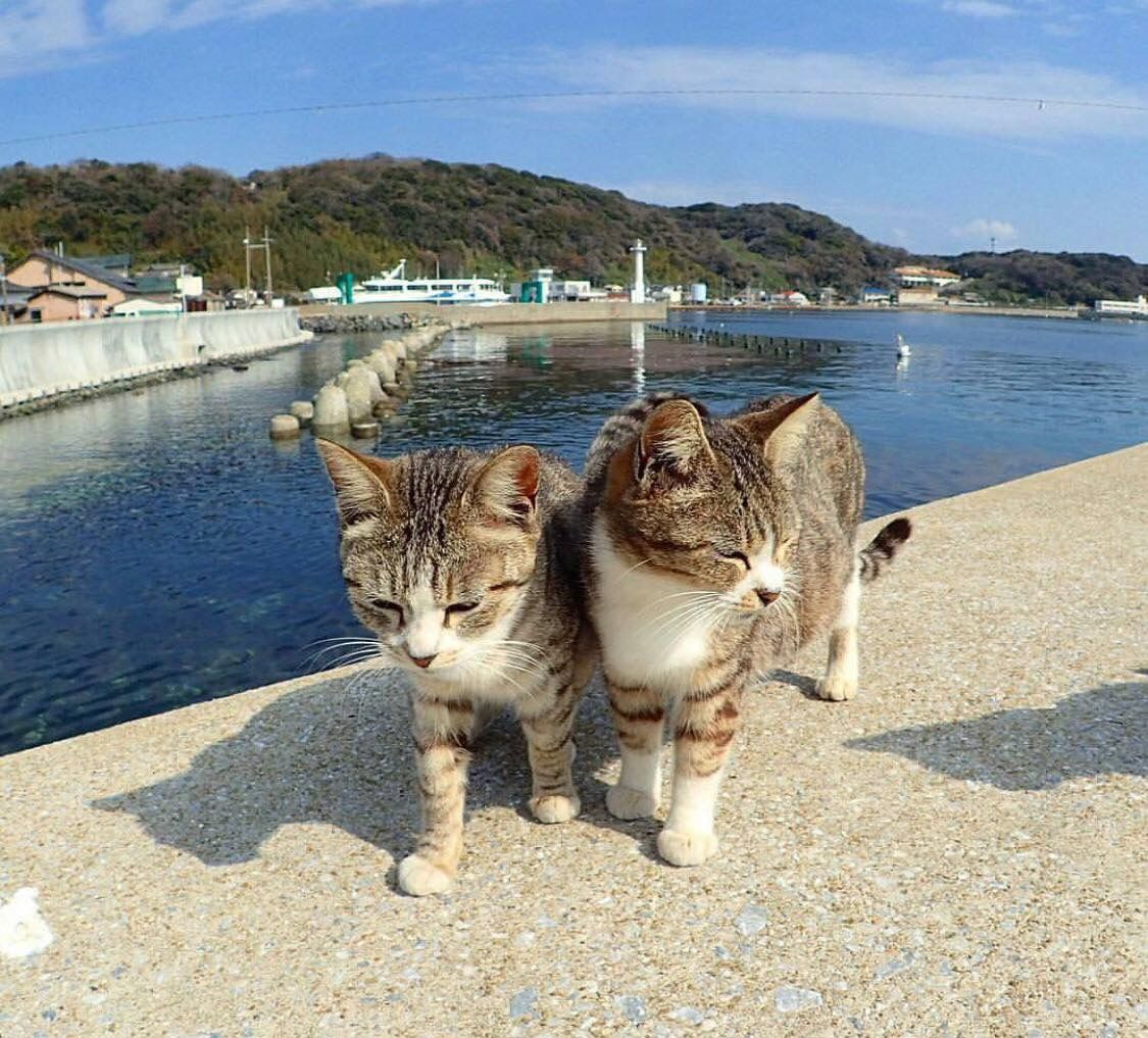Pin By Katheryn Norton On Cats Adventure Cat Baby Cats Cats