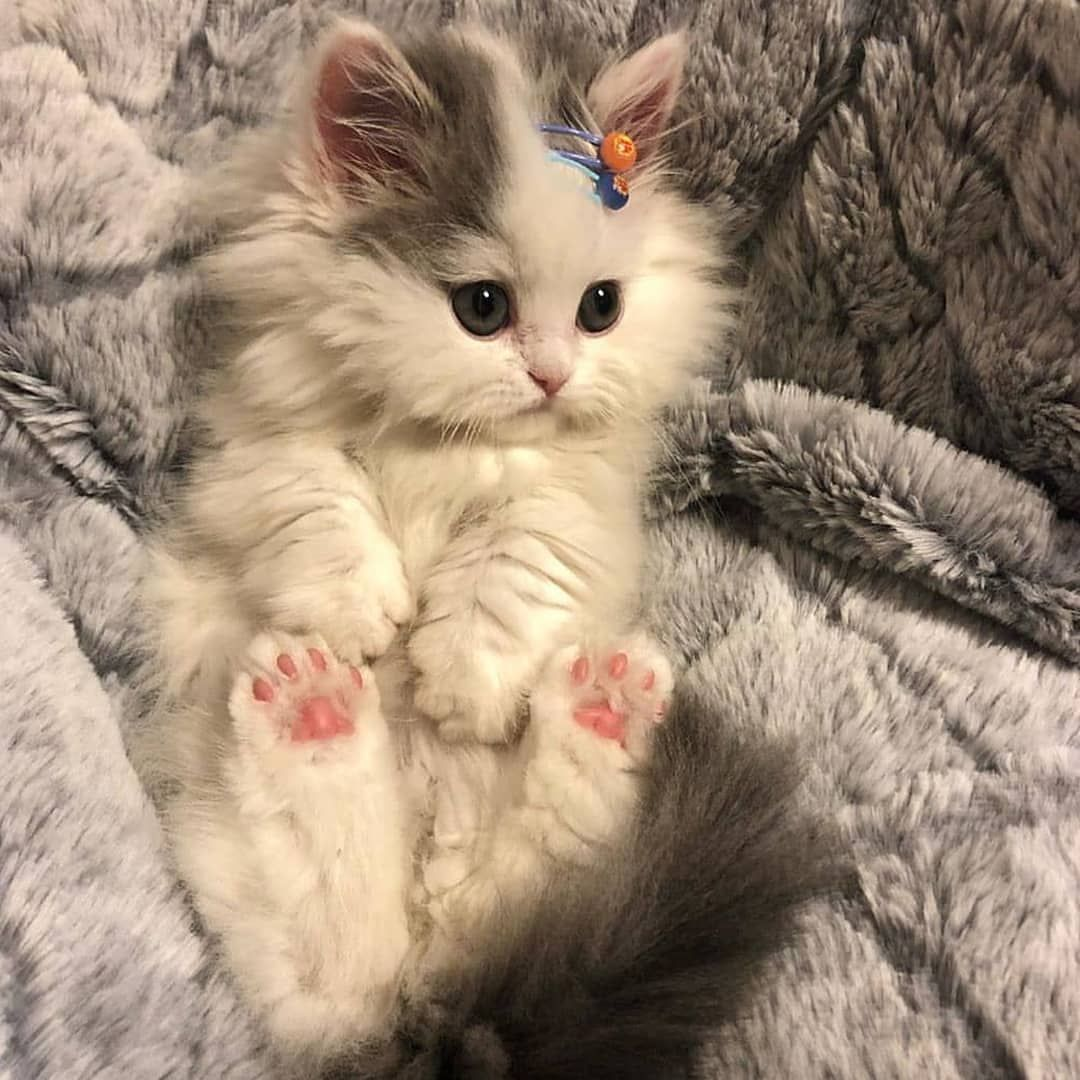Dogs And Cats Kitty Cat Kitty Funny Cute Kitty Kitty Make Up Funny Kitties Lovely Cats Kitty Quotes Kitten Quot In 2020 Cute Baby Cats Cute Animals Kittens And Puppies