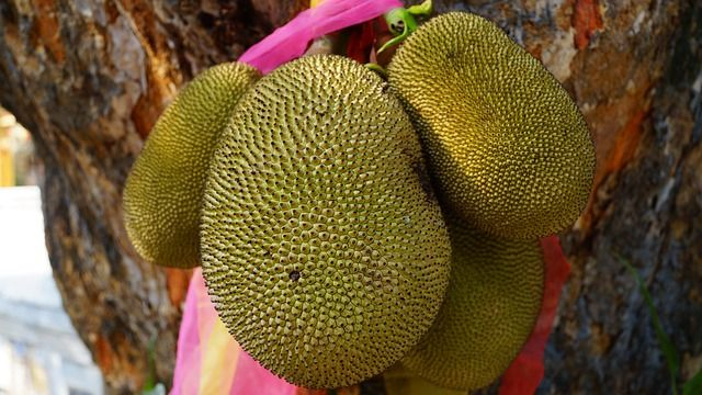 10 Amazing Reasons to Eat Jackfruit | 1mhealthtips
