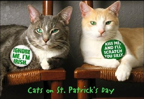 Image result for st patrick's day cats