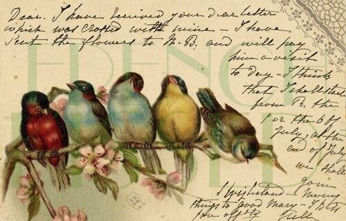 Vintage birds in row