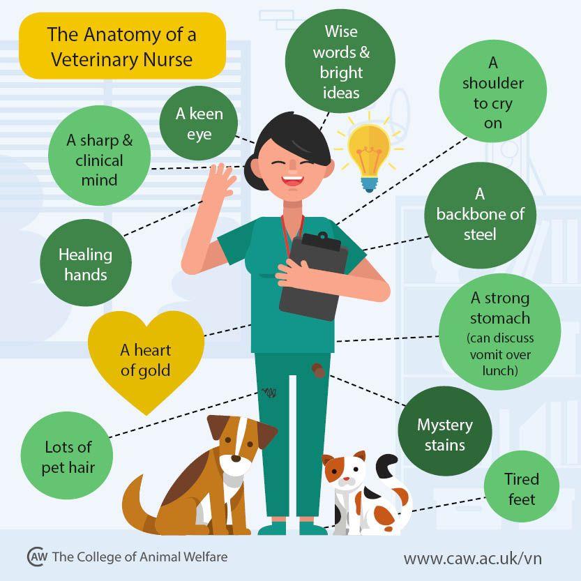 Anatomy of a veterinary nurse vet medicine vet