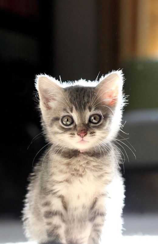 Chaton trop mignon chaton chat chaton et b b chat - Photo chaton trop mignon ...