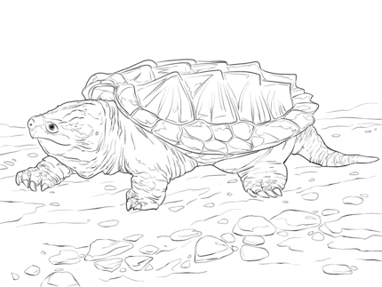 click to see printable version of walking alligator snapping turtle coloring page