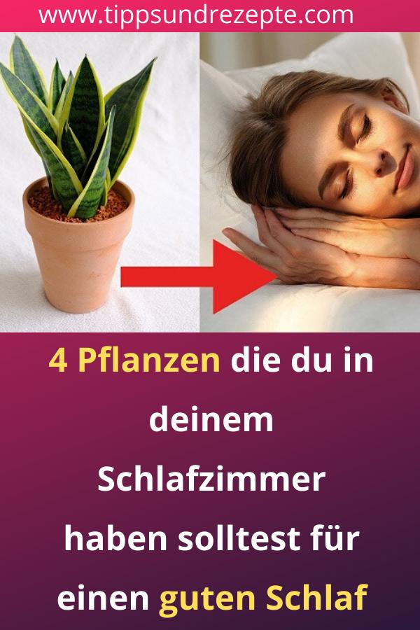 4 Pflanzen Die Du In Deinem Schlafzimmer Haben Solltest Fur Einen Guten Schlaf In 2020 Mit Bildern Schlafapnoe Schlafen Pflanzen
