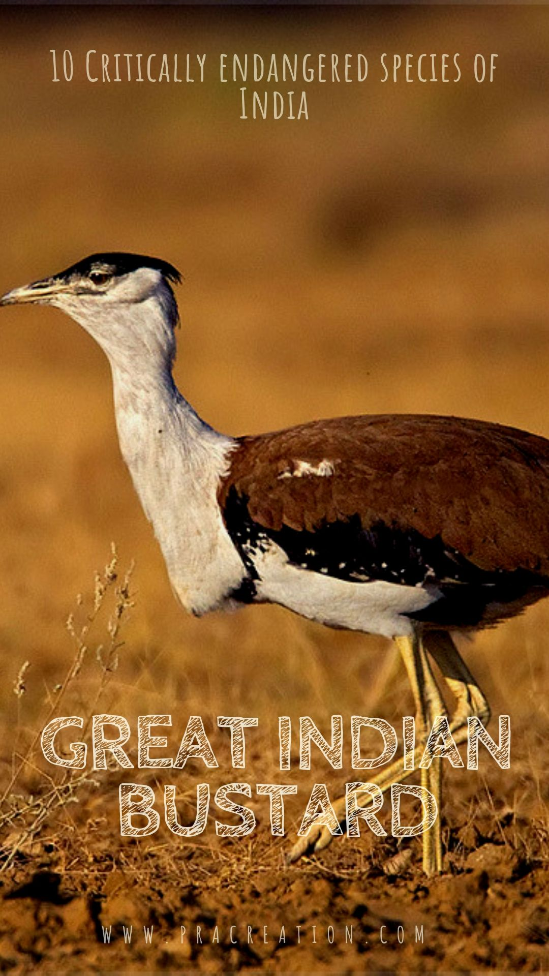 10 Critically Endangered Species of India (With images