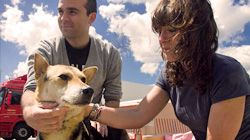 Voiceless Friends - An Undercover Investigation by Animal Equality and Last Chance for Animals
