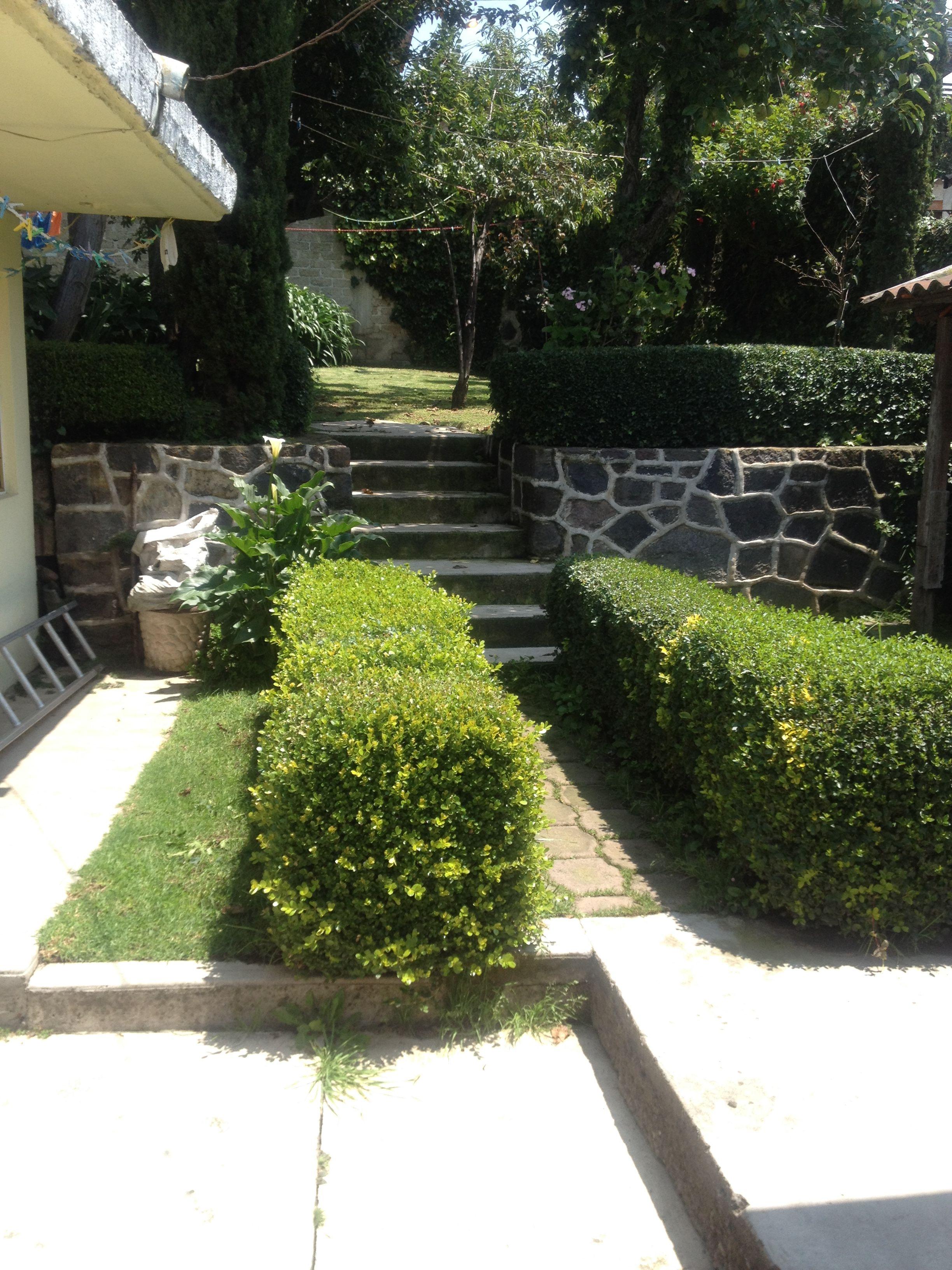 Organiza una barrera de setos ya sea con truenos y o for Jardines pequenos y baratos