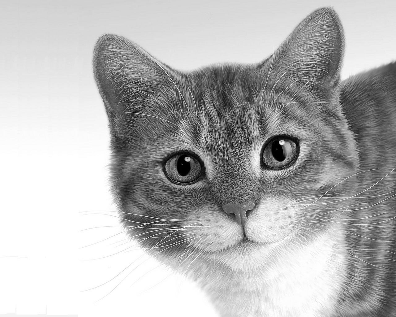 How to draw a realistic kitten face