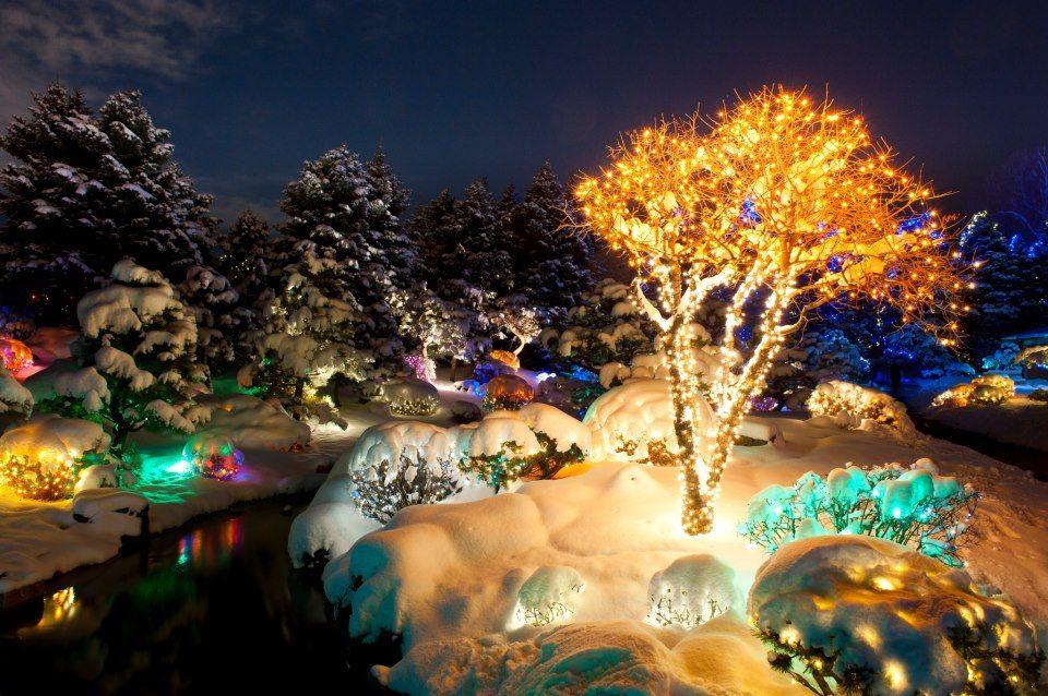 Denver Botanic Gardens Blossoms of Light returns on Nov