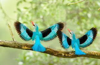 صور طيور جميلة خلفيات طيور حب Hd Beautiful Bird Wallpaper Most Beautiful Birds Bird Pictures