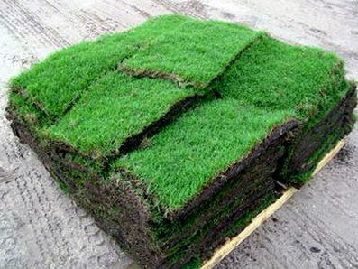 1 Pallet 450 Sq Ft Minimum Sod Prices 140 175 Bermuda Zoysia Multi Pallet Discounts Pickup Available 1 Piec Grass For Sale Sod Grass Bermuda Sod