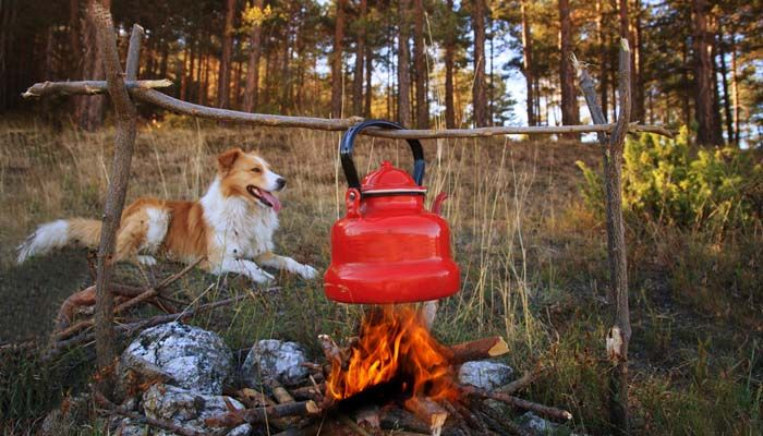 Camping With Dogs: Tips, Guidelines, Do's And Don'ts | Top Dog Tips