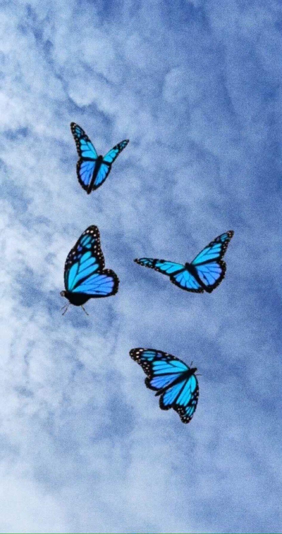 My Friends Is Create Itskamila N Blue Butterfly Wallpaper Butterfly Wallpaper Purple Wallpaper Iphone