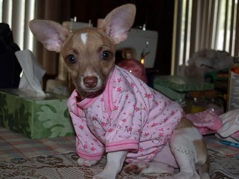 How To Modify Baby Clothes Into Small Dog Clothes!!