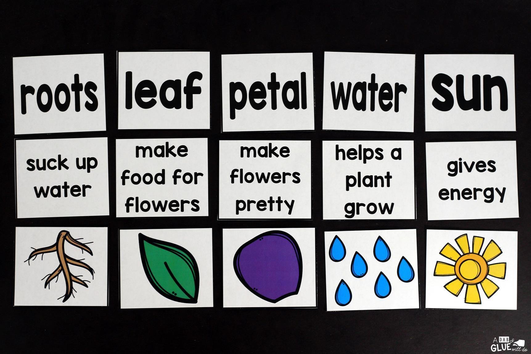 Plants Unit Powerpoint Lessons Printables Plants Kindergarten Planting For Kids Plant Lessons [ 1149 x 1723 Pixel ]