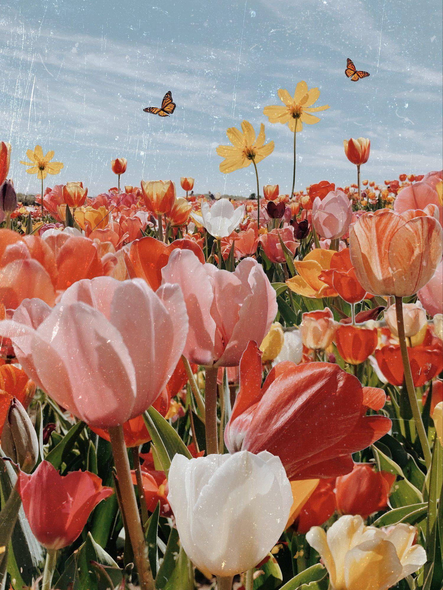 Tulip Season A Map Of Dreams In 2020 Flower Aesthetic Flower