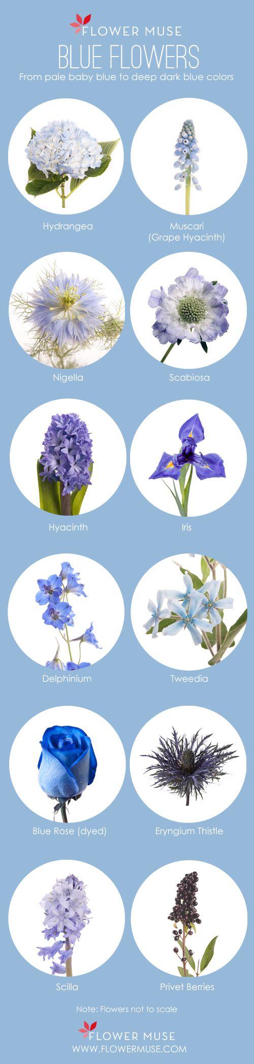 Our Favorite Blue Flowers Blue wedding flowers, Flower