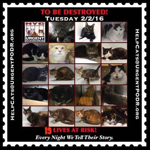 19 Nyc Cats Are In Danger All 3 Shelter Locations Open 8am The