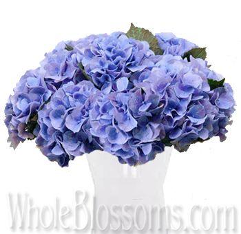 Buy Wholesale Dutch Lavender Blue Hydrangeas Wedding Flowers Blue Wedding Flowers Blue Hydrangea Wedding Flowers