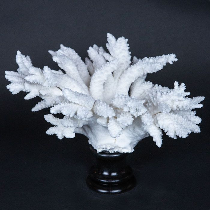 Branch coral mounted on a turned wooden base. 11