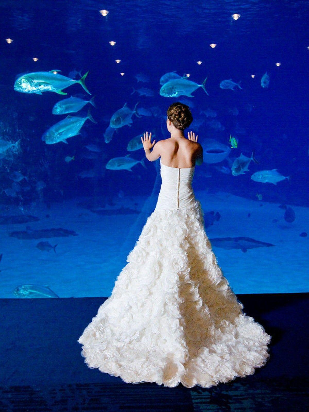 georgia aquarium wedding! | georgia weddings | pinterest