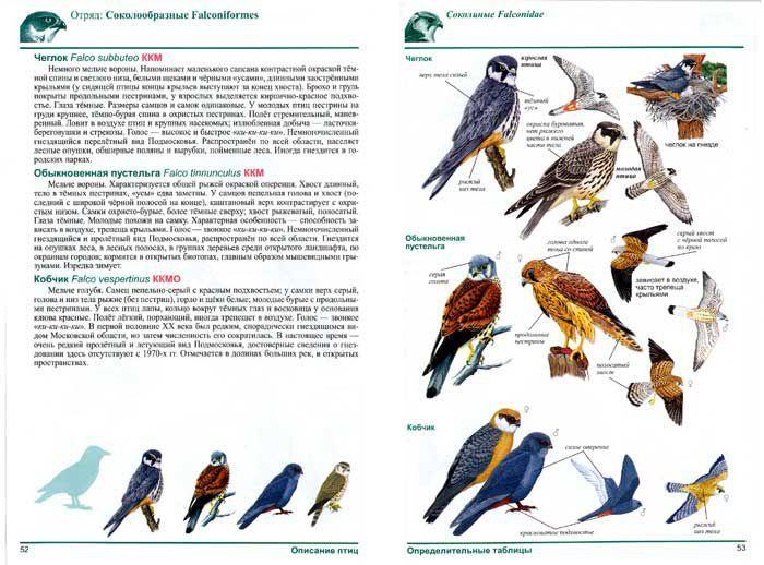 фотосъемка атлас птицы подмосковья фото с названиями известно, что