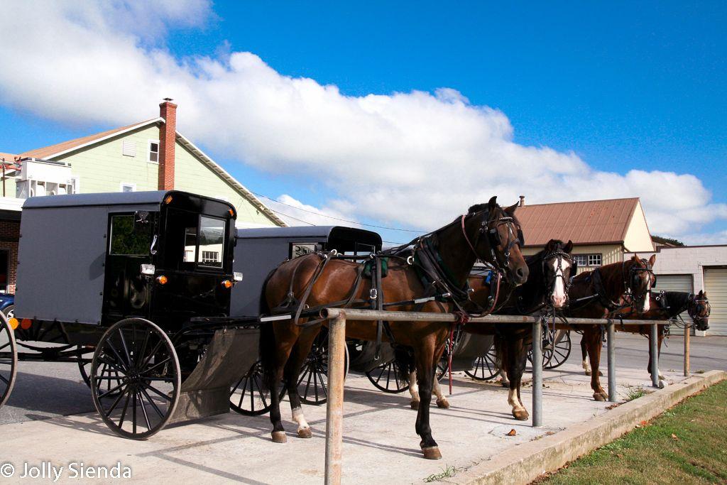 A Group of Amish Horses. Jolly Sienda Photography Horses