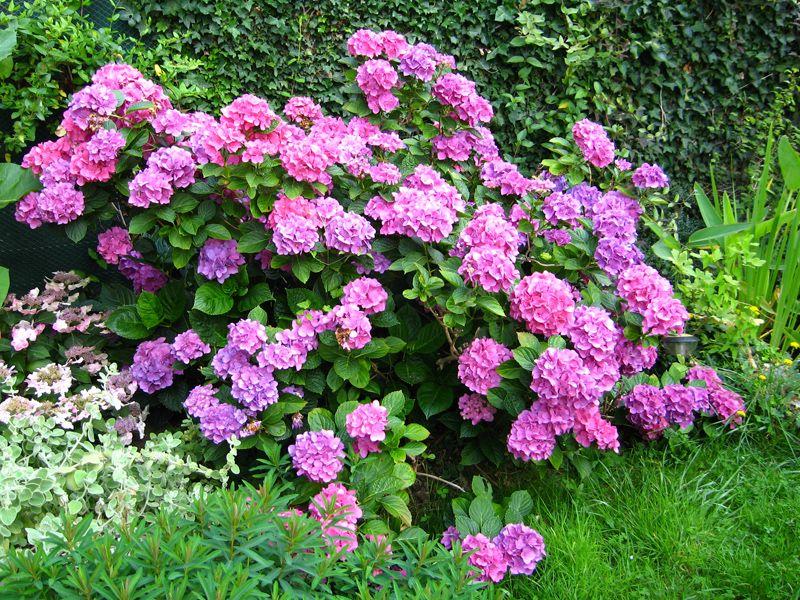 les fleurs de l 39 ombre jardins plante ombre plantes d. Black Bedroom Furniture Sets. Home Design Ideas