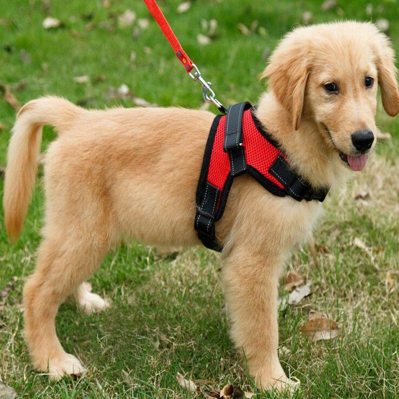 Find More Dog Vests Information About Soft Air Mesh Dogs Vest