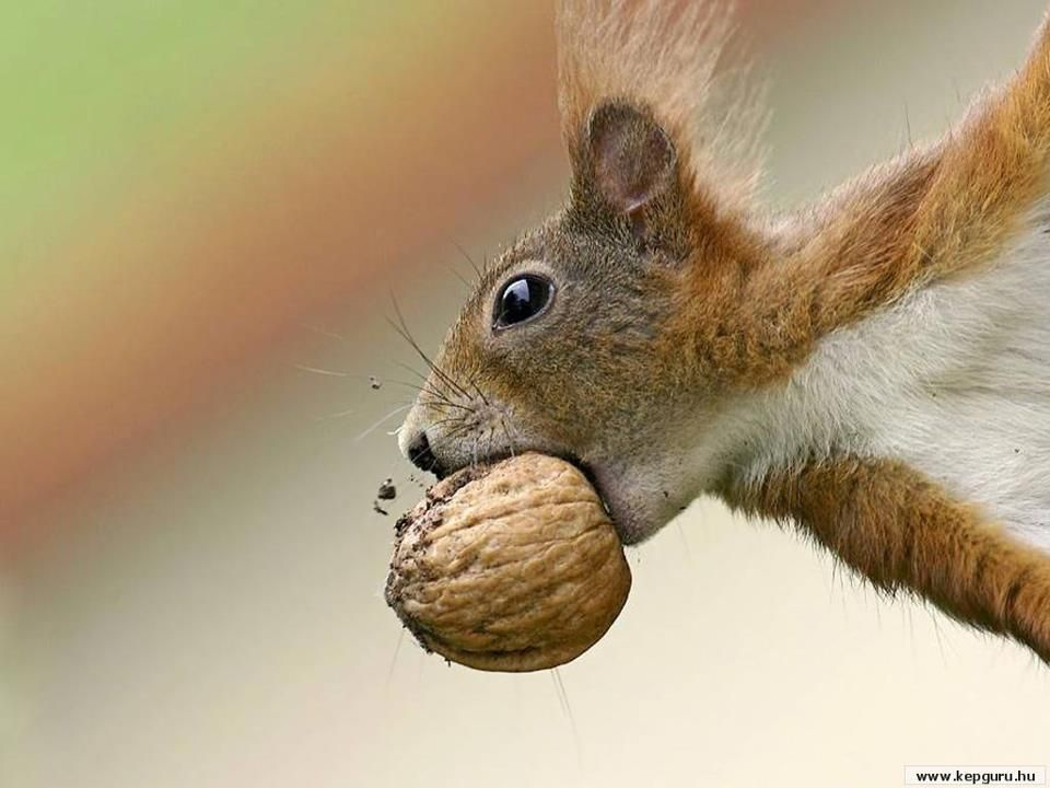 """You will never take my nuts """"you dirty rat""""!"""