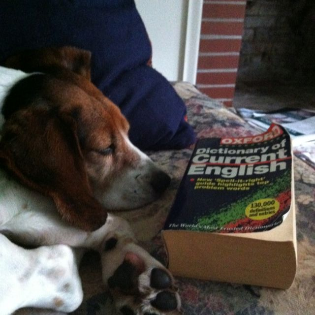 Buster's favourite dictionary.